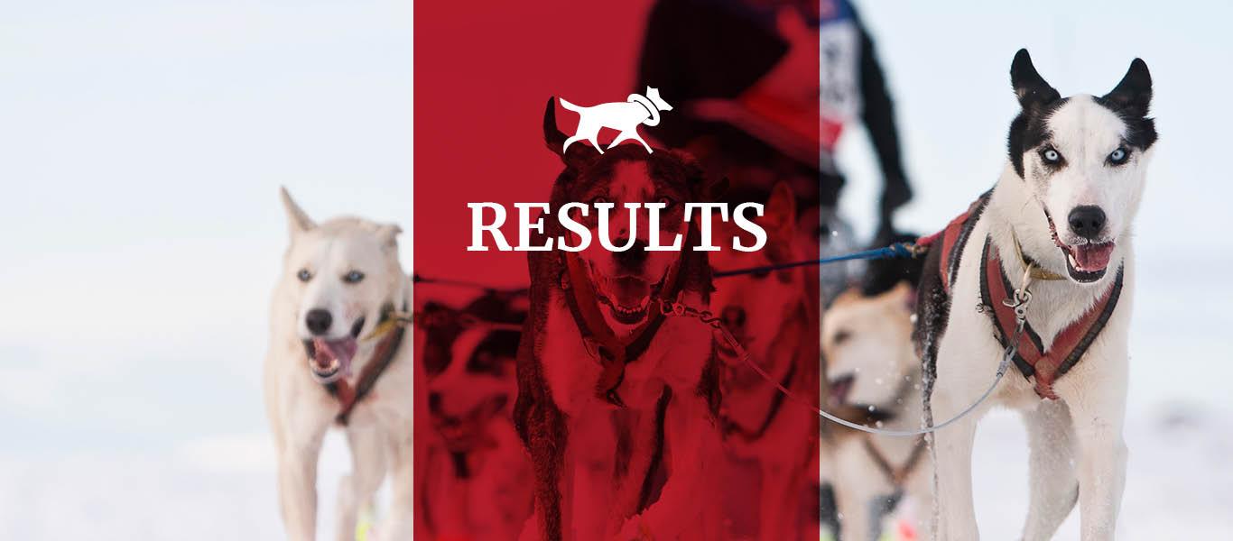 bilde av hunder i lead - resultater